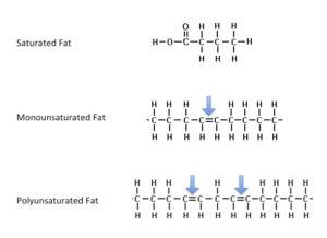 Masne kiseline - struktura
