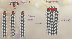 Trigliceridi - struktura
